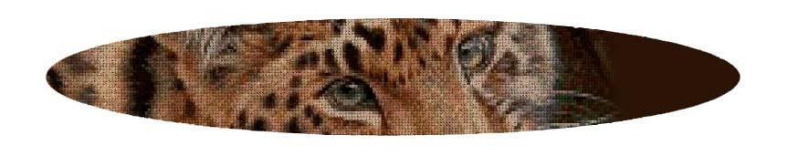 Kits de punto de cruz 50 colores de Animales